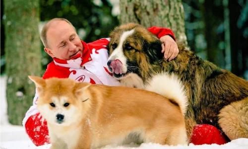 Песков рассказал о домашних животных Путина: глазам не поверите