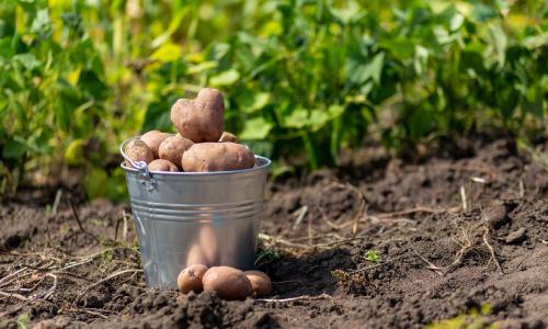 Как не испортить урожай своими руками: 5 главных ошибок огородников