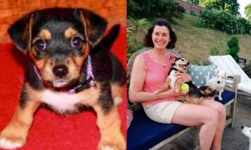 Пропавшая собака вернулась к хозяевам спустя 11 лет