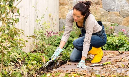 Названы 10 натуральных методов избавления от сорняков