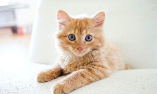 Эксперты раскрыли всю правду о рыжих котах: вы не поверите